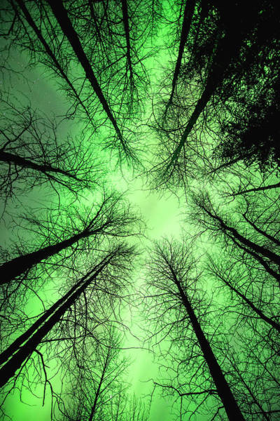 The Aurora Borealis Glows Overhead Art Print