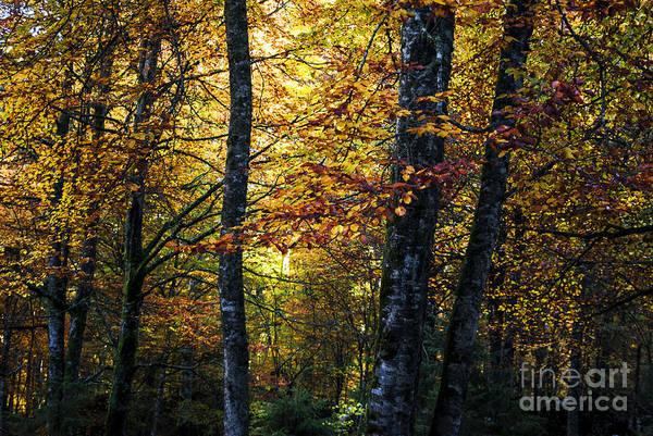 Wall Art - Photograph - The Autumn by Yuri San