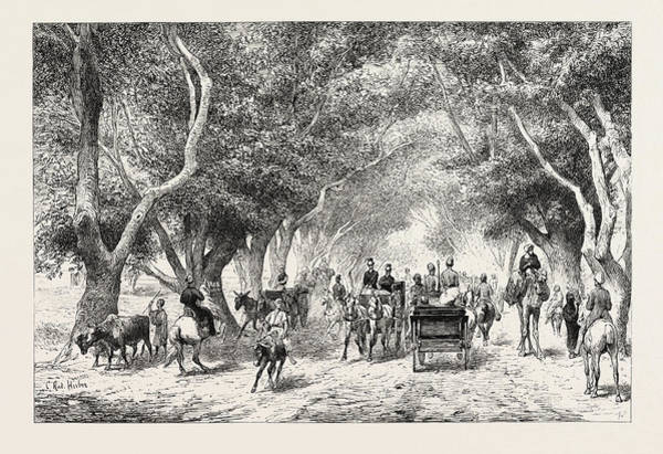 Wall Art - Drawing - The Avenue At Shoobra,  Egypt by Litz Collection