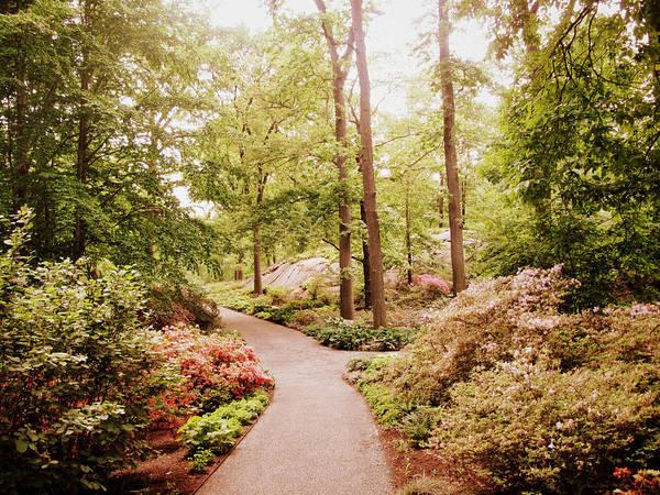 Photograph - The Azalea Path by Jessica Jenney