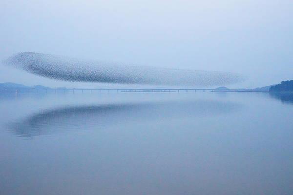 Symmetry Photograph - The Baikal Teals 2 by Penboy