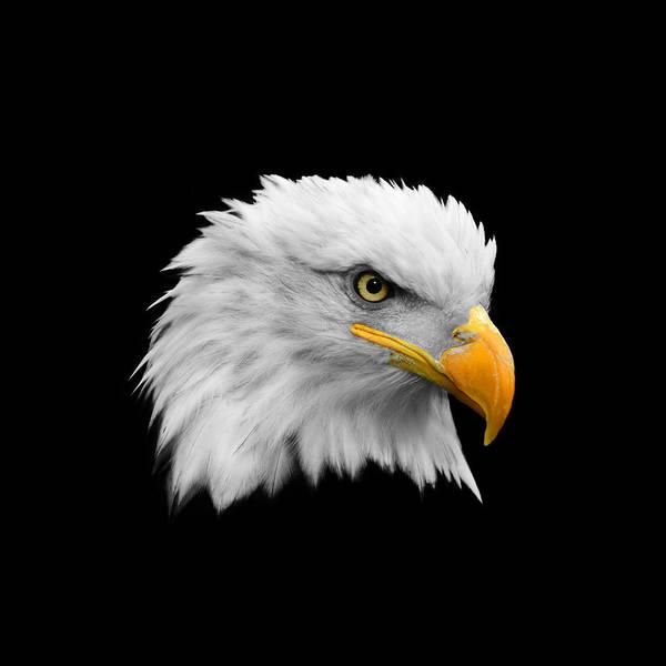 Bald Photograph - The Bald Eagle by Mark Rogan