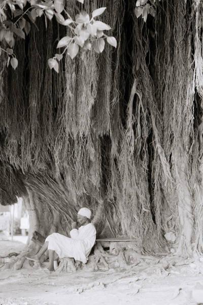 Photograph - The Banyan Tree by Shaun Higson