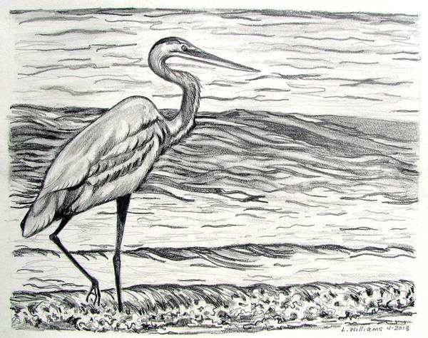 Great Blue Heron Drawing - The Beachcomber by Linda Williams
