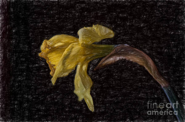 Dried Digital Art - Beauty At The End by Lois Bryan