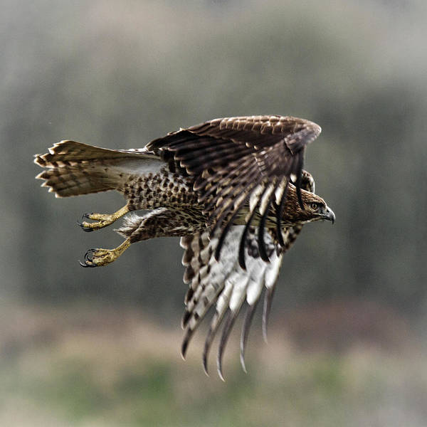Photograph - The Beauty Of Flight by Wes and Dotty Weber