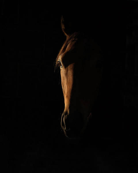 Wall Art - Photograph - The Beauty Of The Thoroughbred by Sharon Lee Chapman