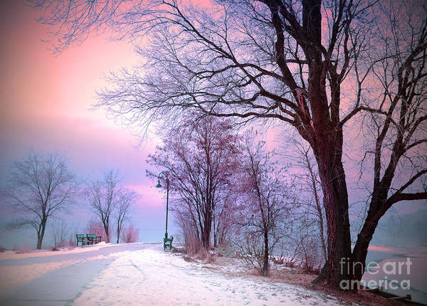 Photograph - The Benches In Winter by Tara Turner