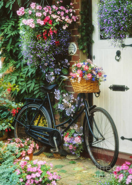 Wall Art - Photograph - The Bicycle At Lavender Cottage by MGL Meiklejohn Graphics Licensing