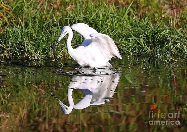 Little Blue Heron Photograph - The Big Catch by Carol Groenen