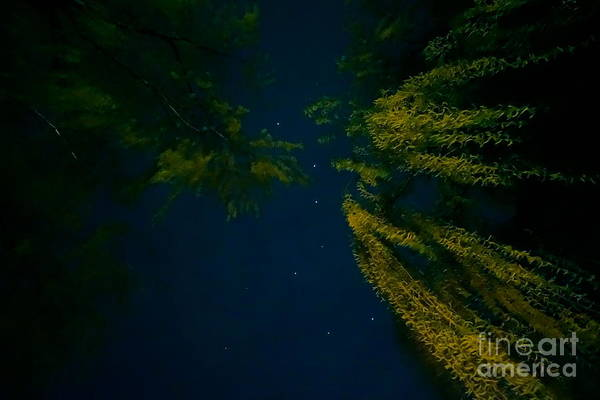 Photograph - The Big Dipper by Jacqueline Athmann