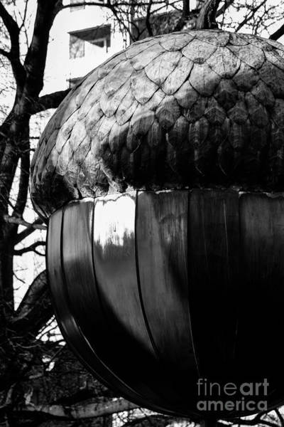 Nc State Wall Art - Photograph - Happy New Year Acorn by Robert Yaeger