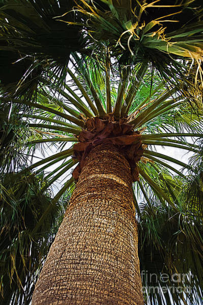 Palm Frond Digital Art - The Big Palm by Kirt Tisdale