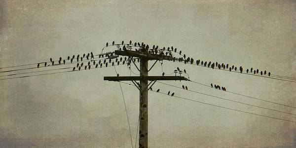Photograph - The Birds by Patricia Strand