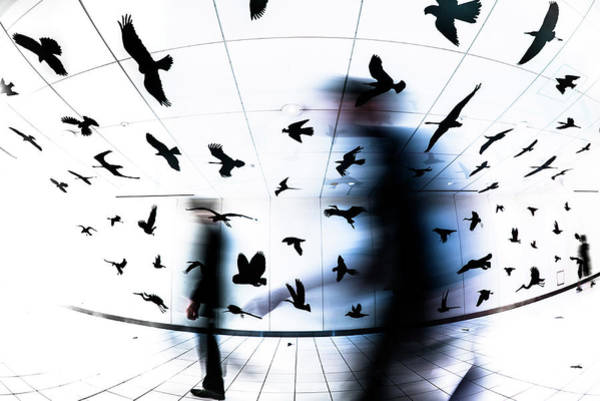 Ghosts Photograph - The Birds by Tetsuya Hashimoto