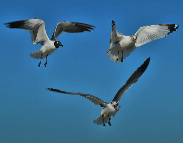 Photograph - The Birds Two by Dave Bosse