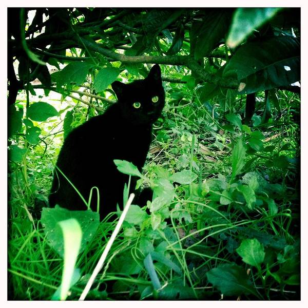Art Prints Photograph - The Black Cat by Photographer, Loves Art, Lives In Kyoto