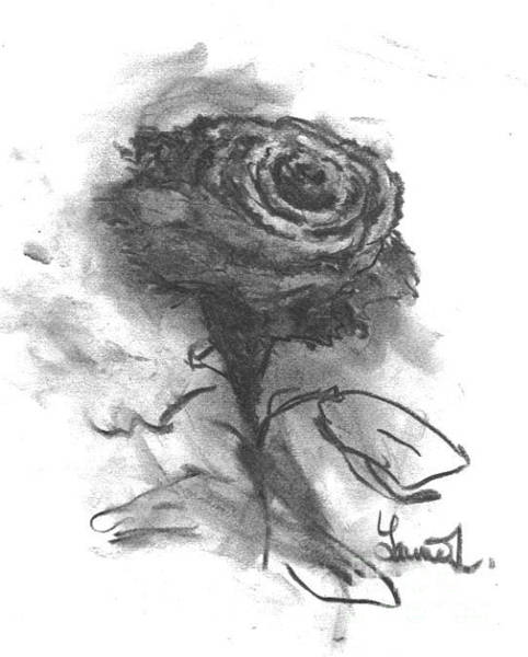 Drawing - The Black Rose by Laurie Lundquist