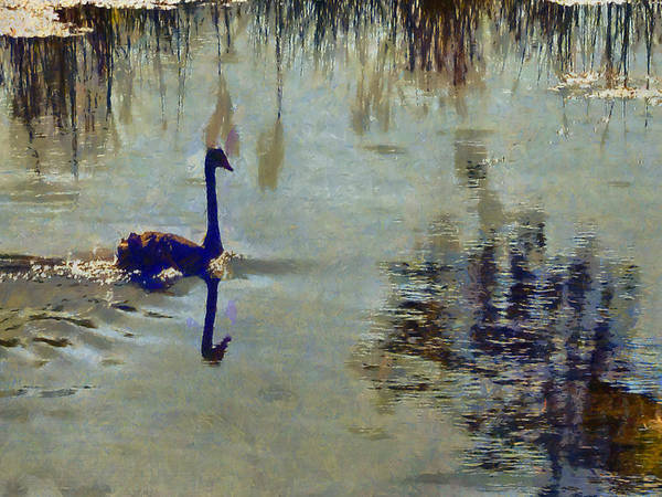 Bullrush Painting - The Black Swan No3 by Neville Wright
