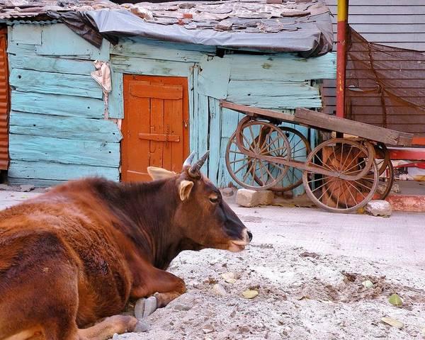 Bemis Photograph - The Blue Barn by Kim Bemis