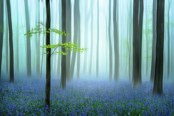 Trunks Photograph - The Blue Forest ........ by Piet Haaksma