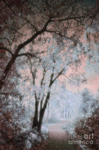 Photograph - The Blue Trees by Tara Turner
