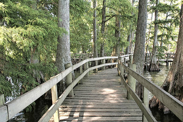 Photograph - The Boardwalk In Natural by Bonnie Willis