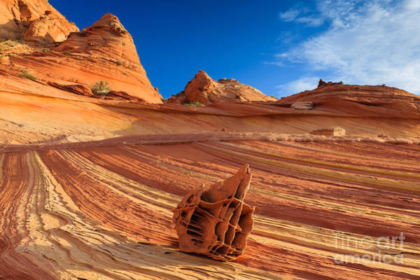 Bone Yard Wall Art - Photograph - The Bone Yard In The North Coyote Buttes by Henk Meijer Photography