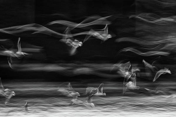 Flying Bird Photograph - The Boundary Between Reality And Fantasy by Ebrahim Bakhtari Bonab