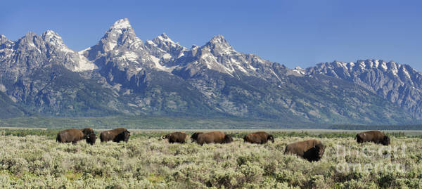 Wall Art - Photograph - The Boys Club Of Grand Teton by Sandra Bronstein