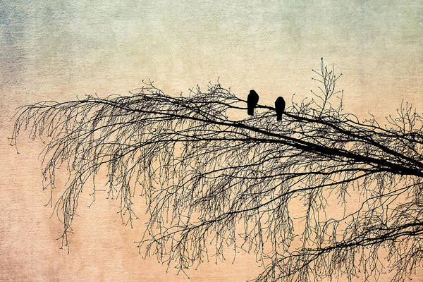 Pigeon Photograph - The Branch Of Reconciliation 2 by Alexander Senin