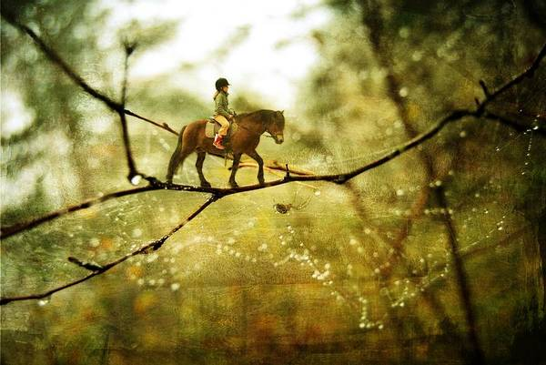 Wall Art - Photograph - The Brave Rider by Sonya Kanelstrand