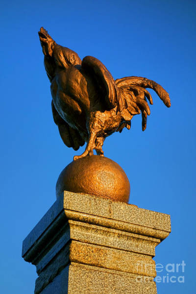 Cock Photograph - The Bronze Rooster by Olivier Le Queinec