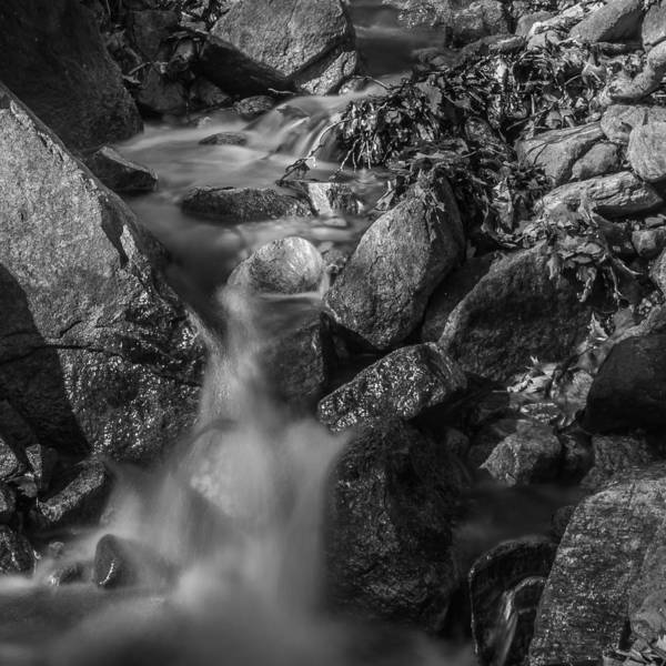 Photograph - The Brook by Jim DeLillo