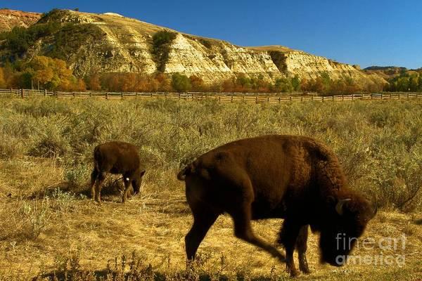 Photograph - The Buffalo Dance by Adam Jewell