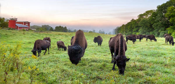 Photograph - The Buffalo Farm by Robert Clifford