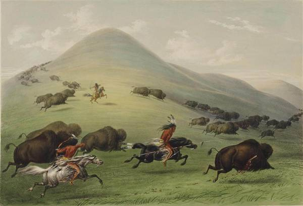 Skill Painting - The Buffalo Hunt by George Catlin