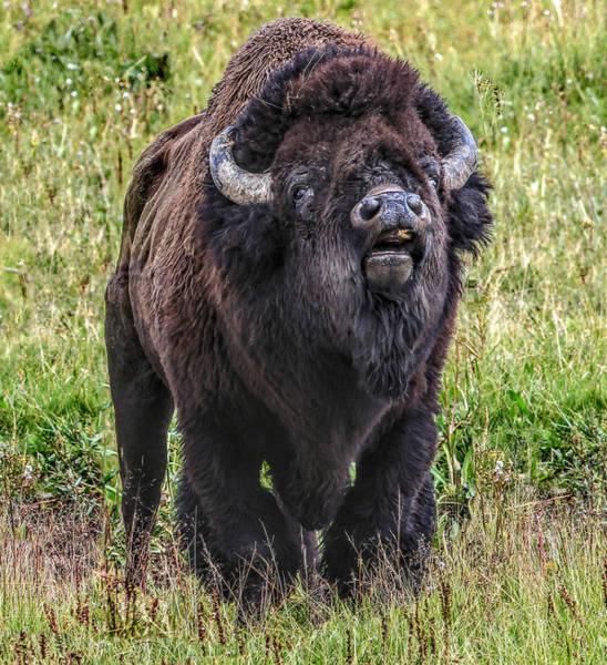 Photograph - The Bull by Frank Vargo