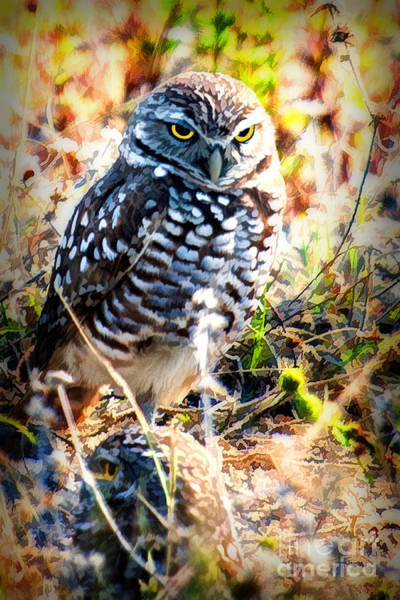 Photograph - The Burrowing Owl  With Atitude by Dan Friend