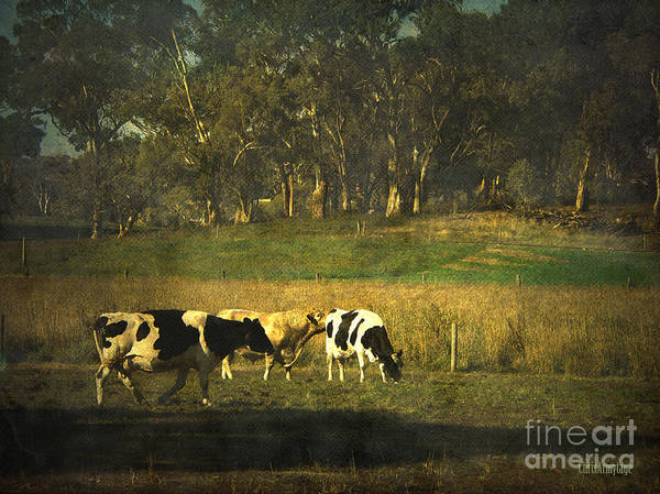 Photograph - The Bush The Cows The Gums ... by Chris Armytage
