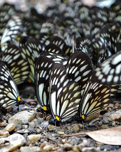 Bemis Photograph - The Butterfly Gathering 2 by Kim Bemis