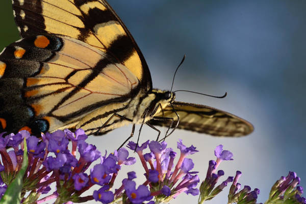 Photograph - The Butterfly by Lori Tambakis