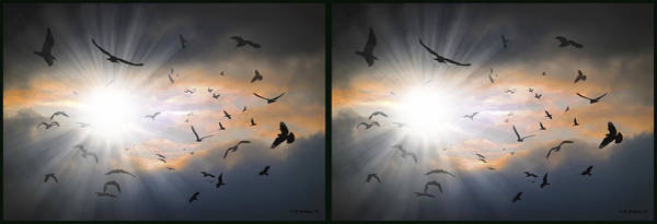 Stereogram Photograph - The Call - The Caw - Gently Cross Your Eyes And Focus On The Middle Image by Brian Wallace