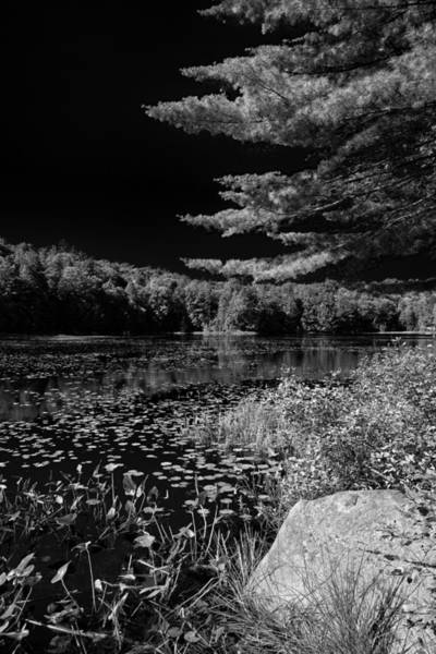 Photograph - The Calm Of Cary Lake by David Patterson