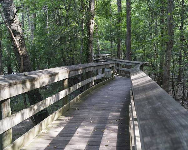 Photograph - The Boardwalk At Lynches River Park by MM Anderson