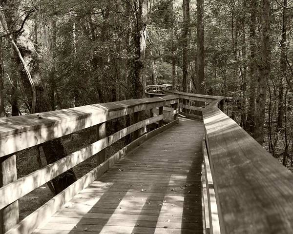 Photograph - The Boardwalk At Lynches River Park Sepia by MM Anderson