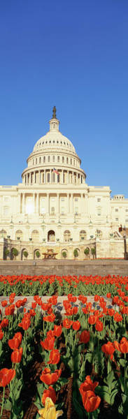 Wall Art - Photograph - The Capitol & Tulip Garden, Washington by Panoramic Images