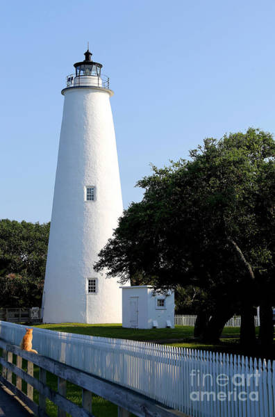 Ocracoke Lighthouse Photograph - The Cat And The Lighthouse by Marty Fancy