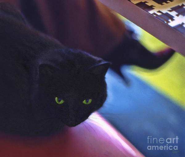 Photograph - The Cat In The Cafe by Jeff Breiman