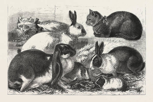 African Animal Drawing - The Cat, Rabbit, And Guinea-pig Show At The Alexandra by African School